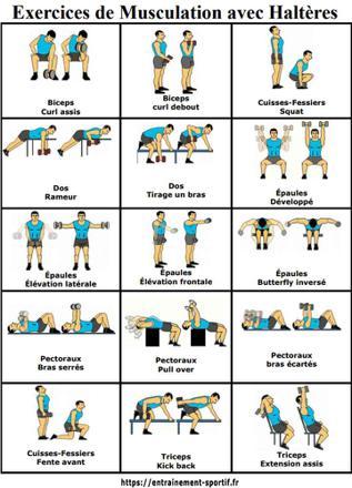 programme musculation