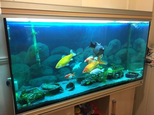 aquarium 350 litres