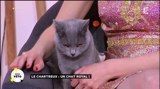 chat royal