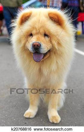 chouchou chien