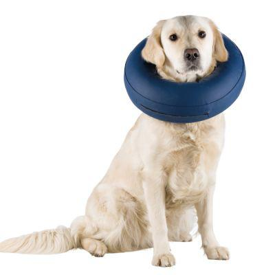 collerette chien gonflable