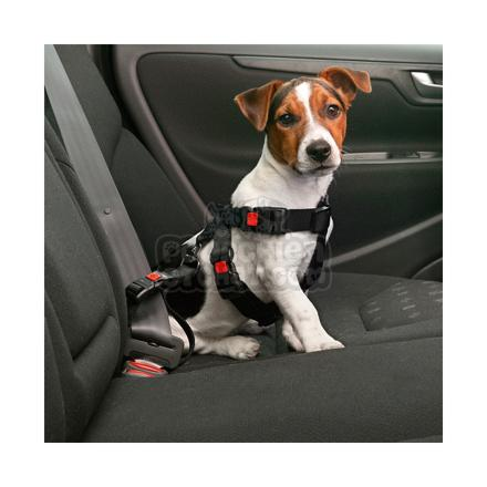 laisse voiture chien