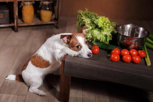 legume pour chien