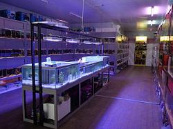 magasin aquariophilie