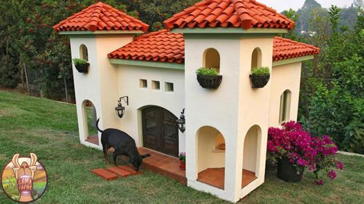 maison chien