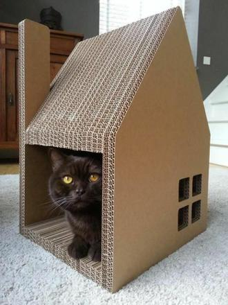 maison de chat