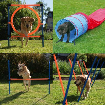 materiel d agility pour chien