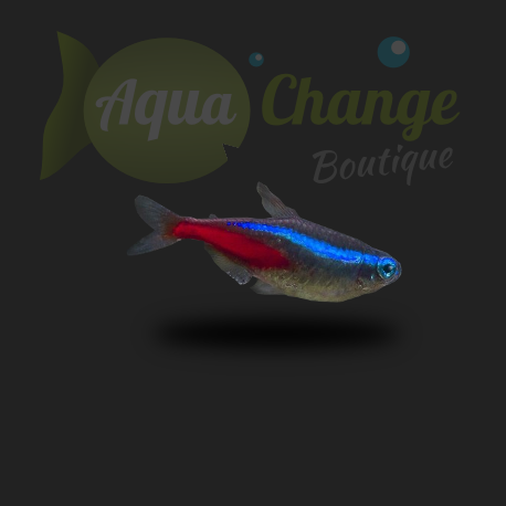néon bleu poisson