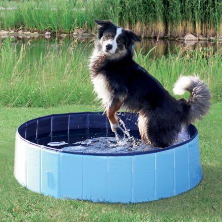 piscine chien