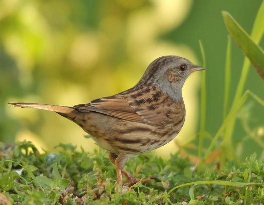 specialiste oiseau